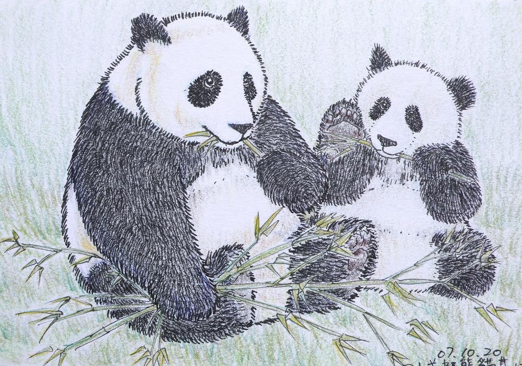 1024x718 Panda Color Pencil Drawing Poyee Lam0321