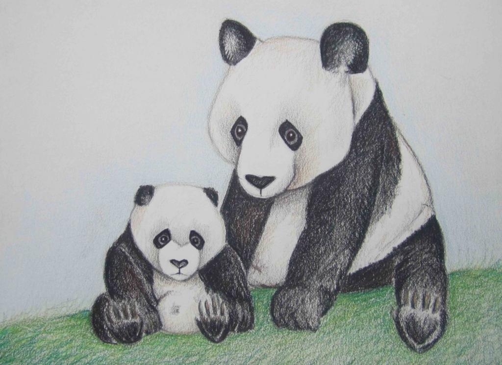 1024x745 Pencil Drawings Of Pandas Pencil Art Work Panda Love1 Original