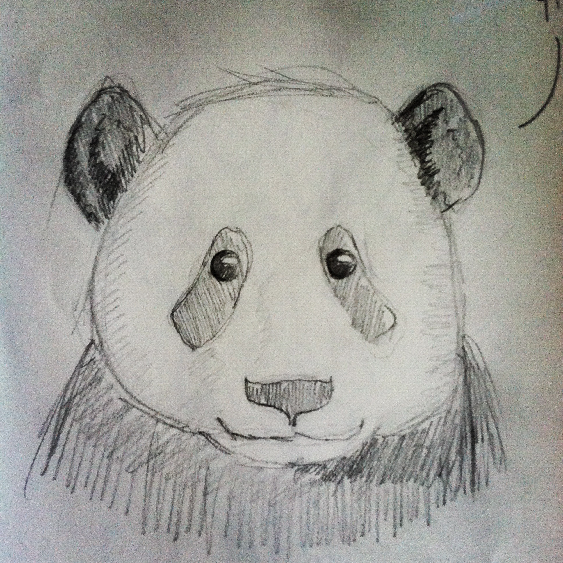 1936x1936 Pencil Sketch Drawing Of Panda A Sketch A Day