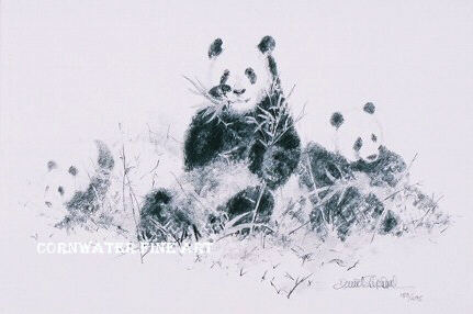 431x286 Art Gallery, Cumbria, David Shepherd,pandas Drawing, Paintings, Prints
