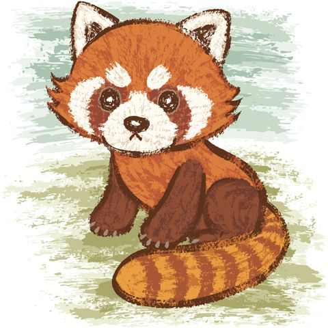 480x480 Drawn Red Panda