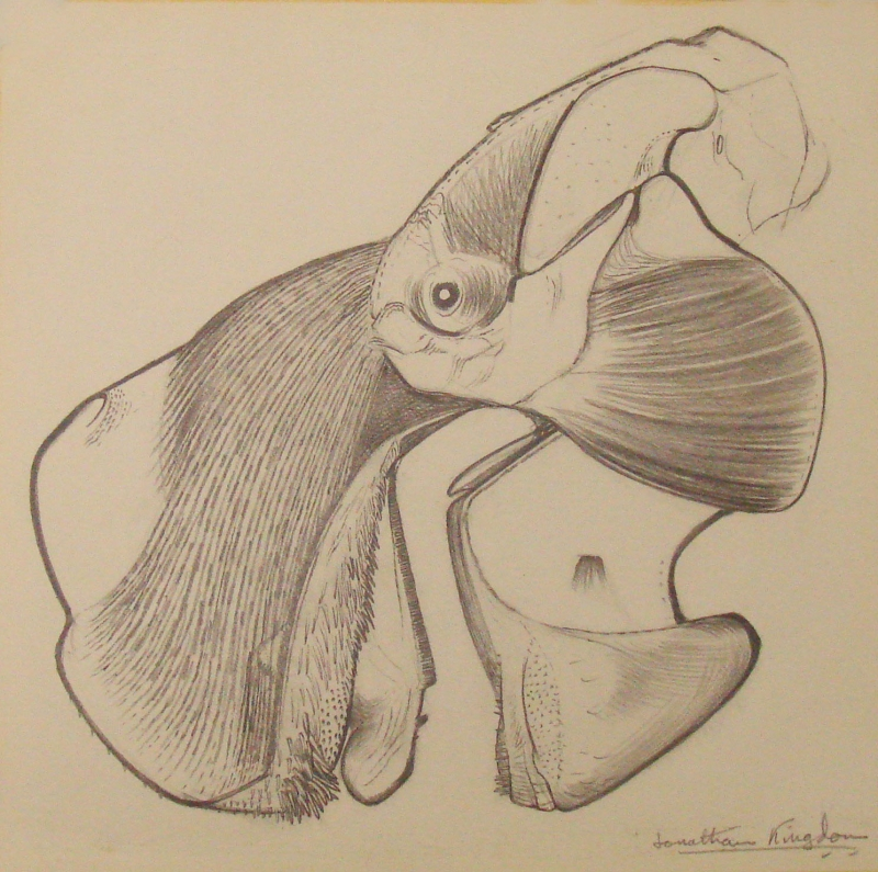 800x795 Gallery Pangolin
