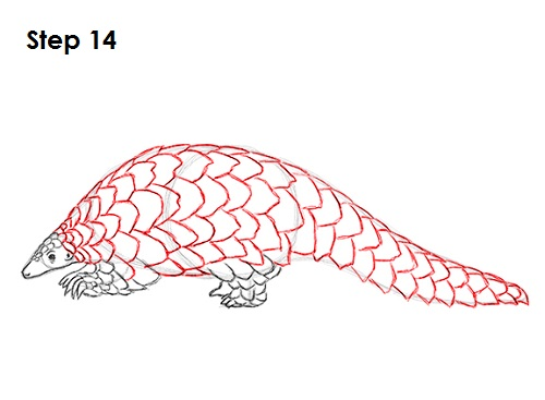 500x367 How To Draw A Pangolin