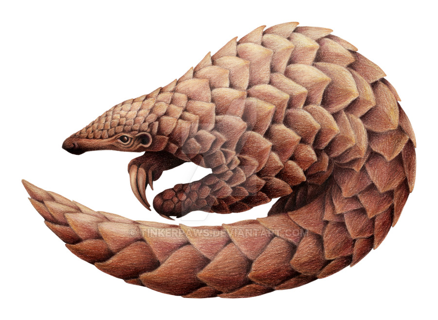 900x657 Pangolin, Finished By Tinkerpaws