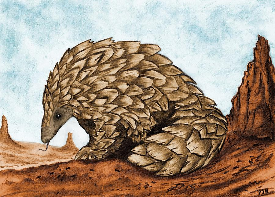 900x646 The Golden Pangolin Drawing By Philip Harvey