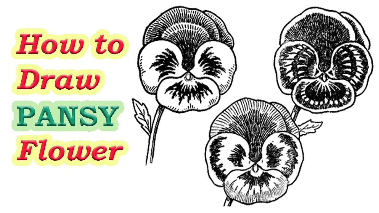 1280x720 How To Draw Pansies With Step By Step Easy Flower Tutorial