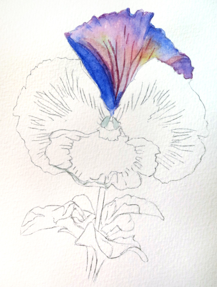736x973 Mini Lesson Watercolor Pansy Artful Passages