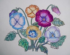 300x235 Pansy Drawings Fine Art America