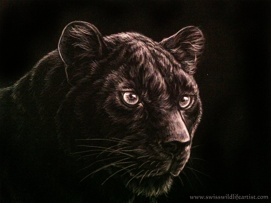 900x672 Black Panther By Bisanti