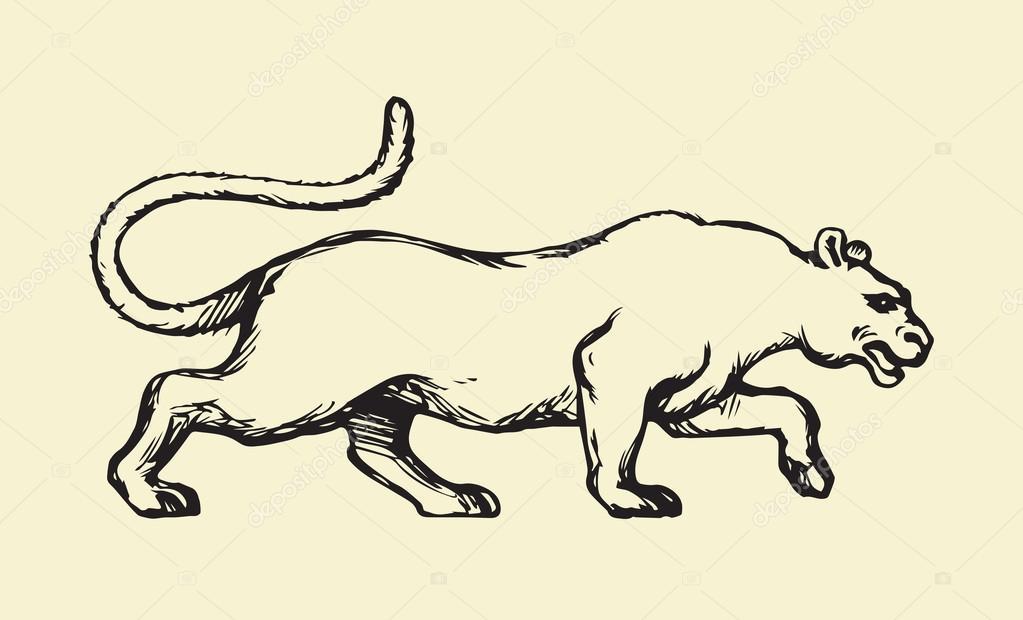 1023x620 Panther. Vector Drawing Stock Vector Marinka