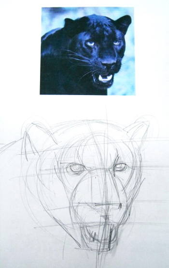 350x553 How To Draw A Panther Face