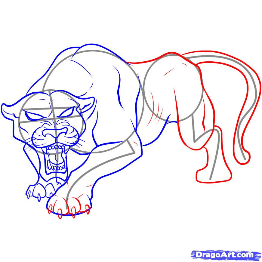 871x871 How To Draw A Black Panther Step 5 Wild Cats Black