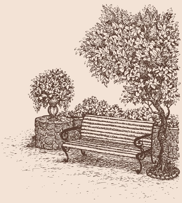 626x700 Vector Drawing. Park Bench Under A Blooming Lilac Bush Canvas