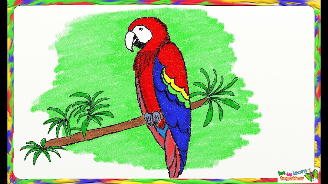 1280x720 Drawing A Simple Macaw Or Parrot How To Draw A Parrot Or Macaw