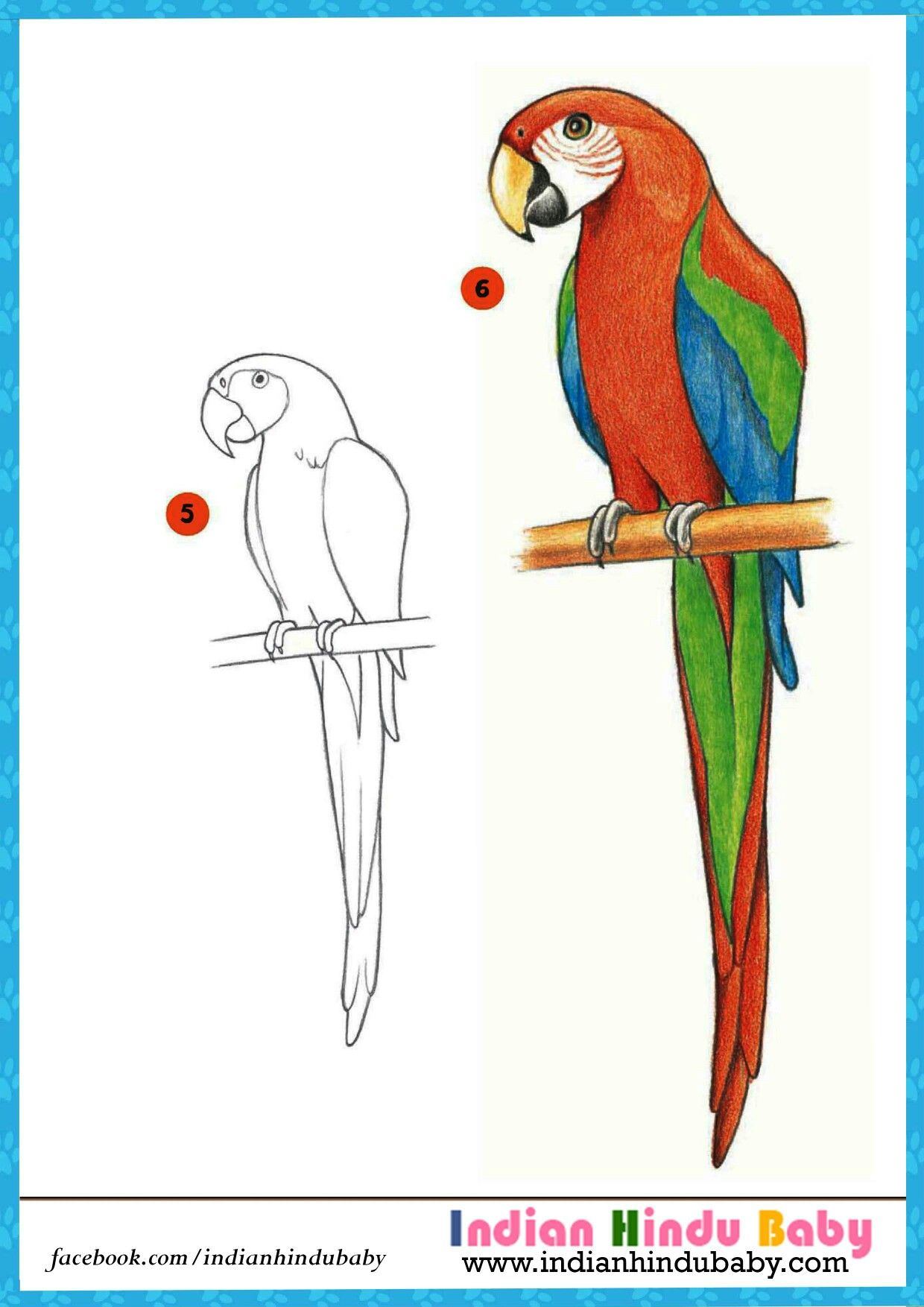 Parrot Drawing at GetDrawings com | Free for personal use Parrot