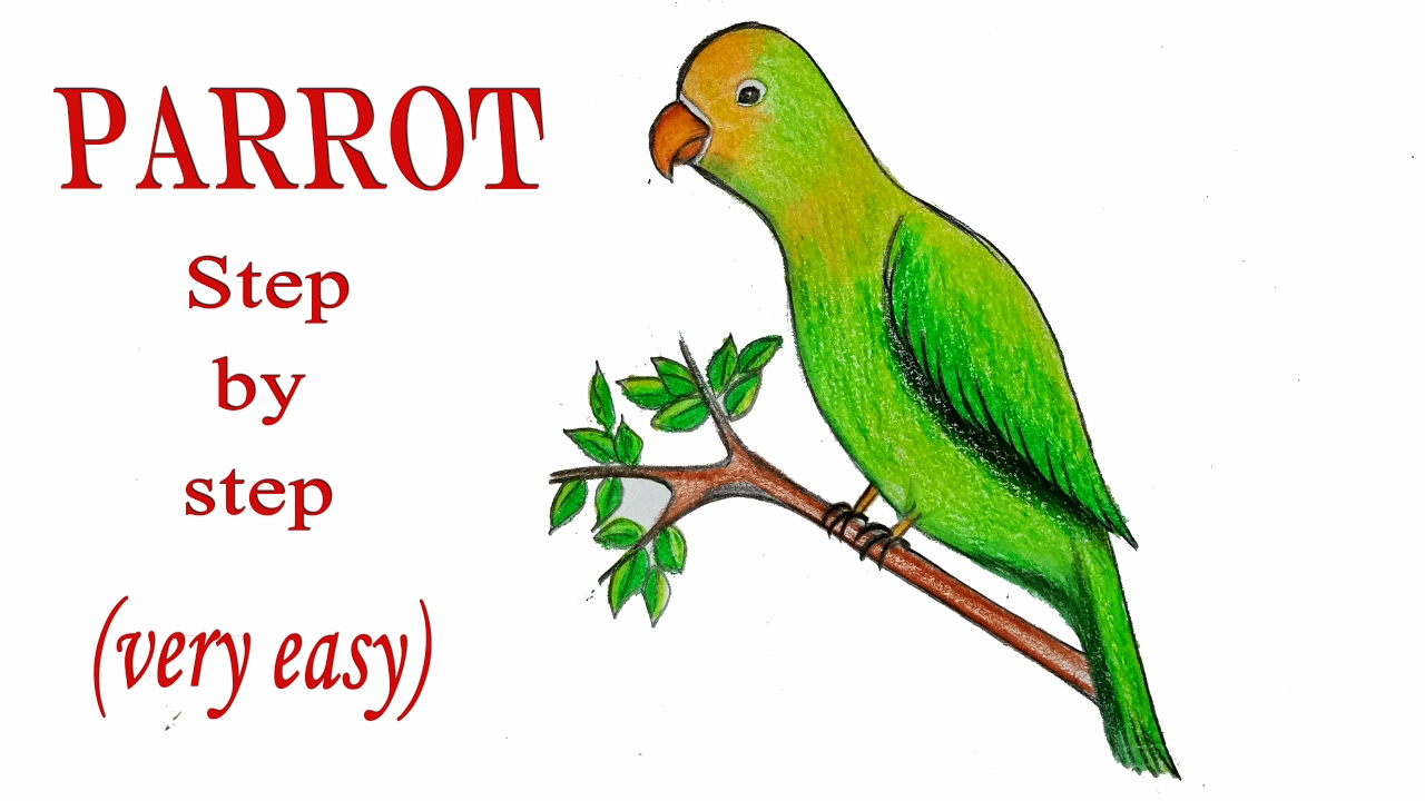 Parrot Drawing Easy at GetDrawings.com | Free for personal use ...