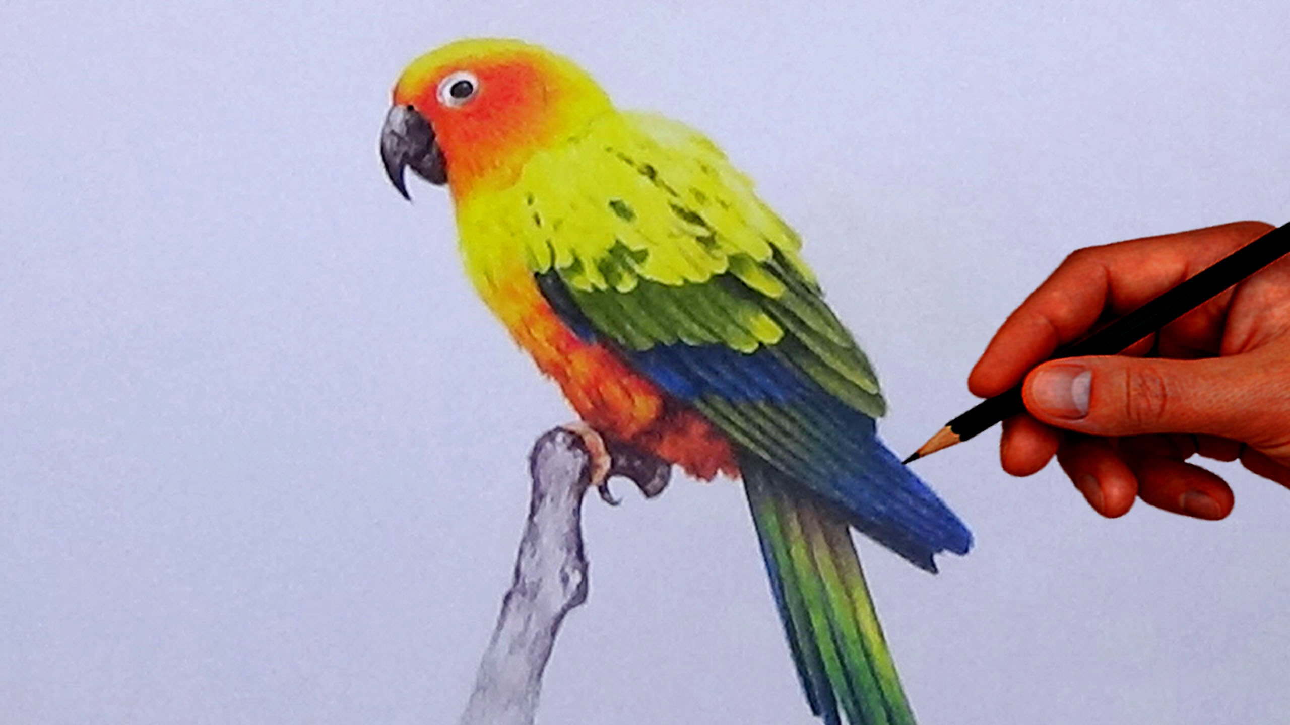 2560x1440 How To Draw A Bird With Simple Colored Pencils
