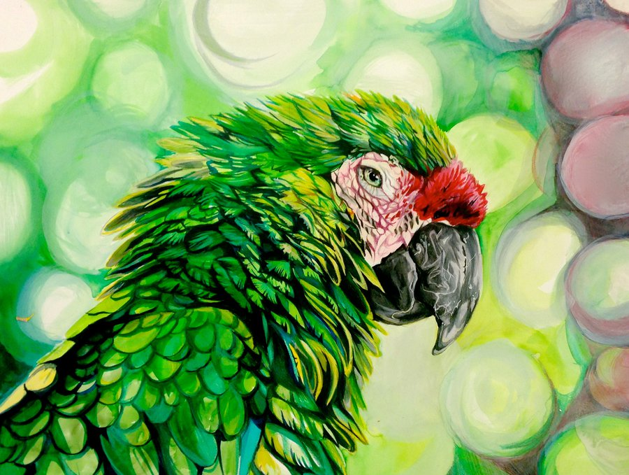 900x679 Parrot Drawing By Lucky978