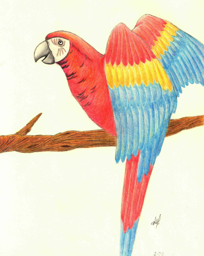 798x1002 Parrot Watercolour Drawing By Specialkaye94