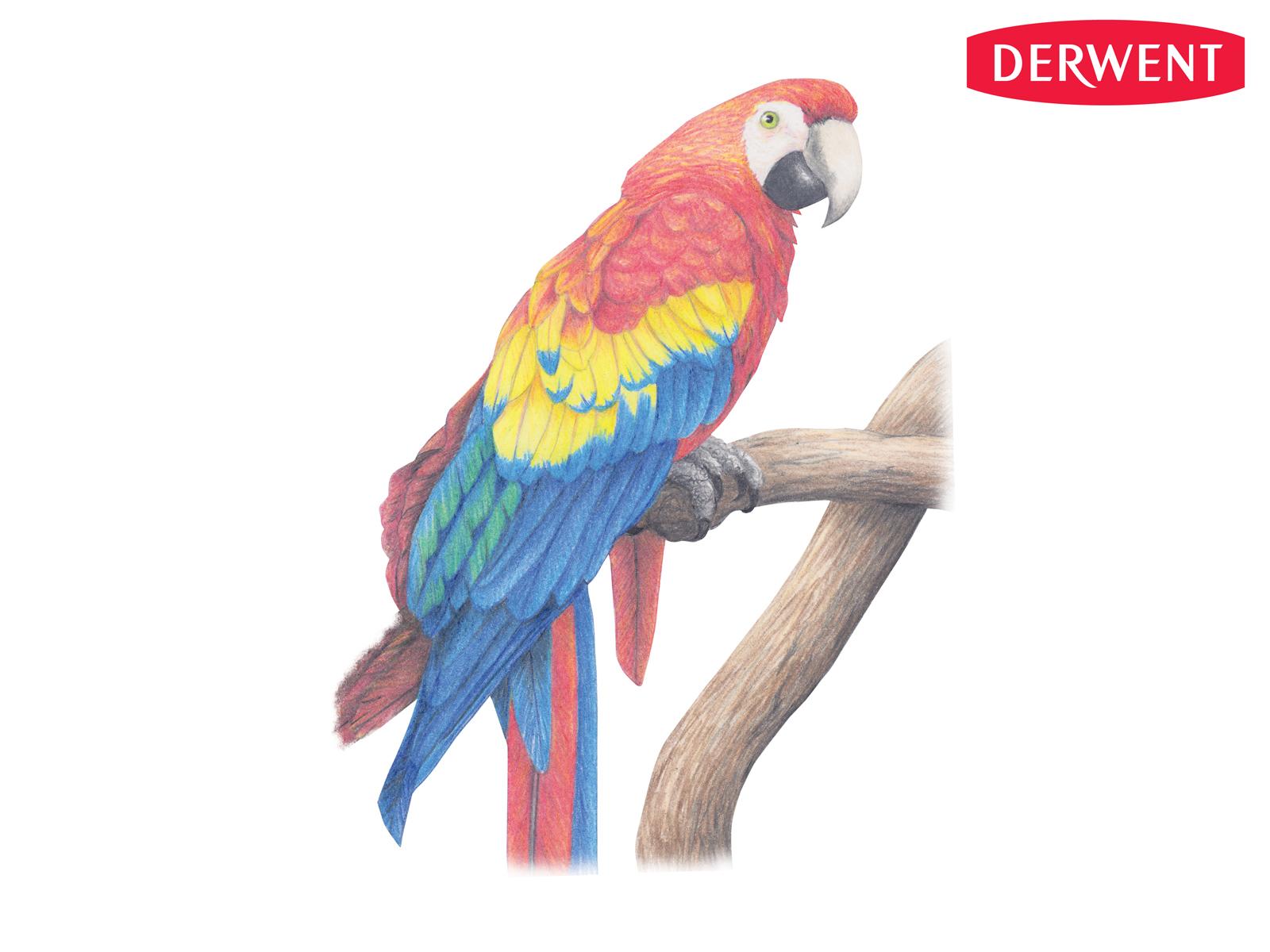 1600x1200 Parrot By Karen Coulson