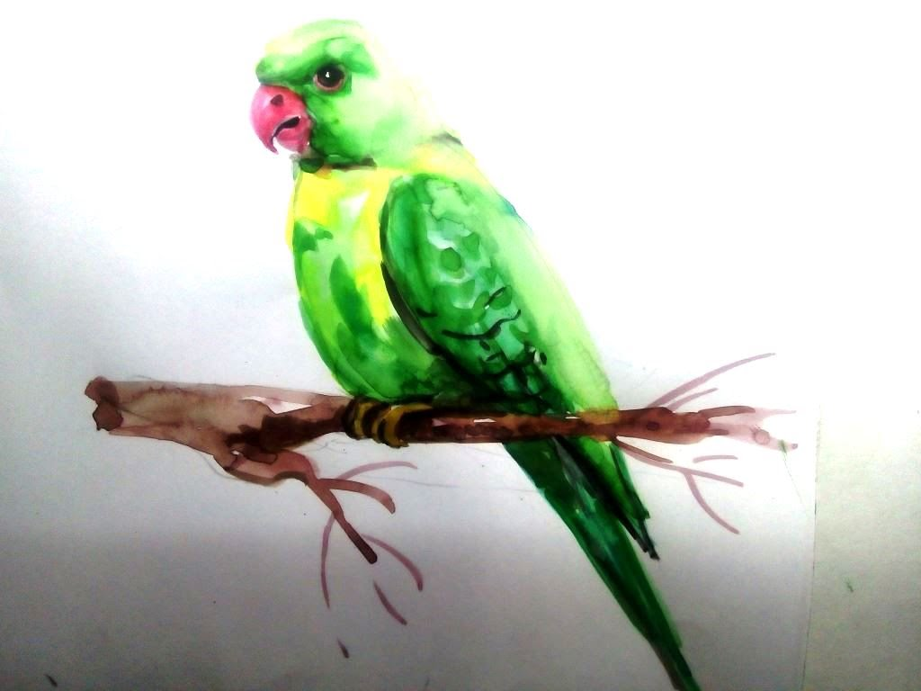 1024x768 Parrot Draw In Water Colour Art