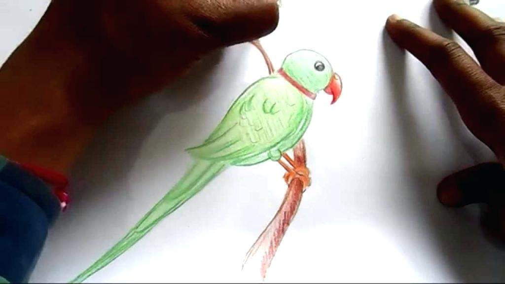 1024x576 Easy Parrot Drawing Simple Parrot Drawing How To Draw Parrot Step