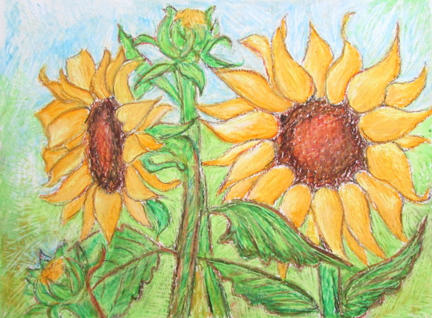 625x460 How To Draw Sunflowers