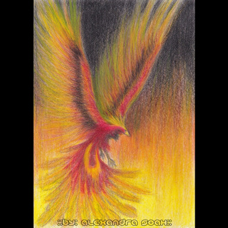 320x320 The Finished Version Of My Fire Bird Drawing. I Started It