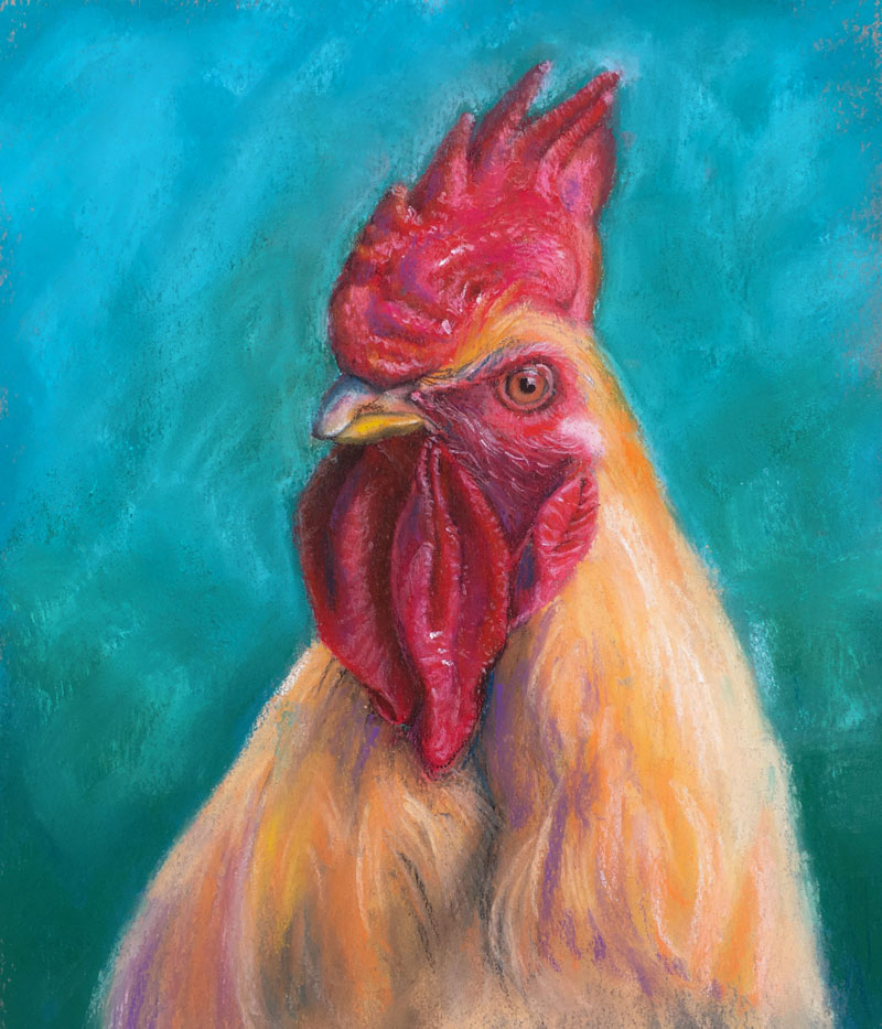 800x933 How To Draw A Rooster With Pastels