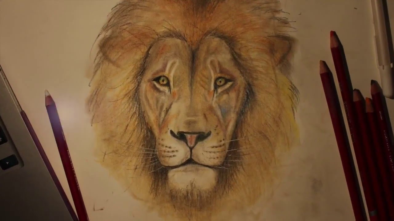 1280x720 Time Lapse Of A Lion. Pastel Pencil Drawing