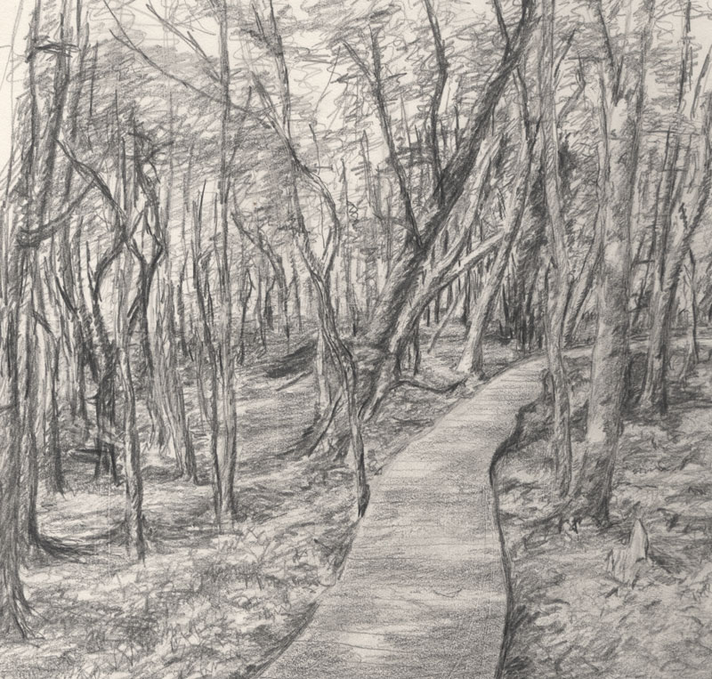 800x763 Path Through The Woods