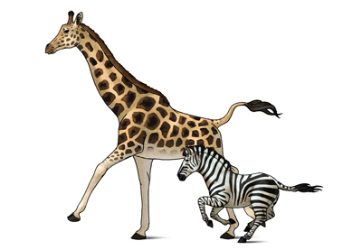 400x277 How To Draw Animals Zebras And Giraffes