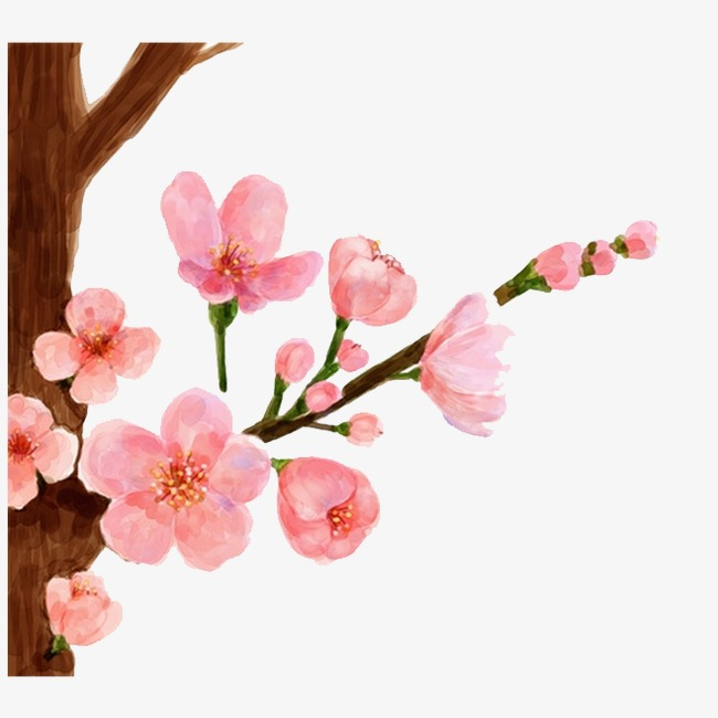 650x650 Drawing Peach, Peach Blossom, Peach Background Png Image