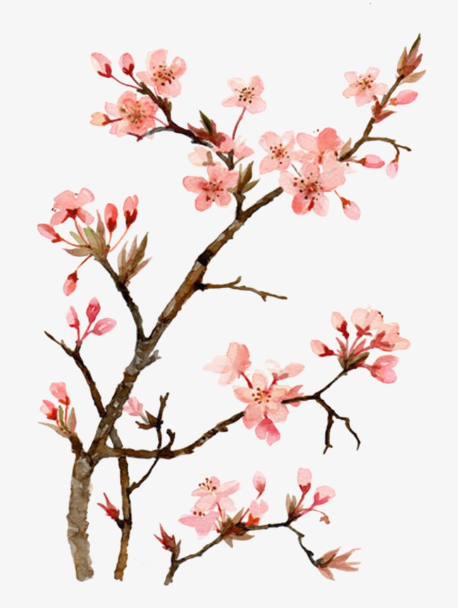 650x863 Drawing Peach, Watercolor, Peach Blossom, Squid Png Image