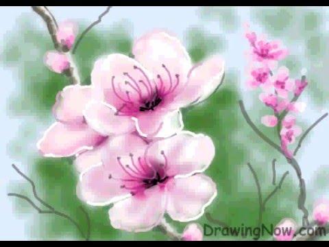 480x360 How To Draw Peach Blossom