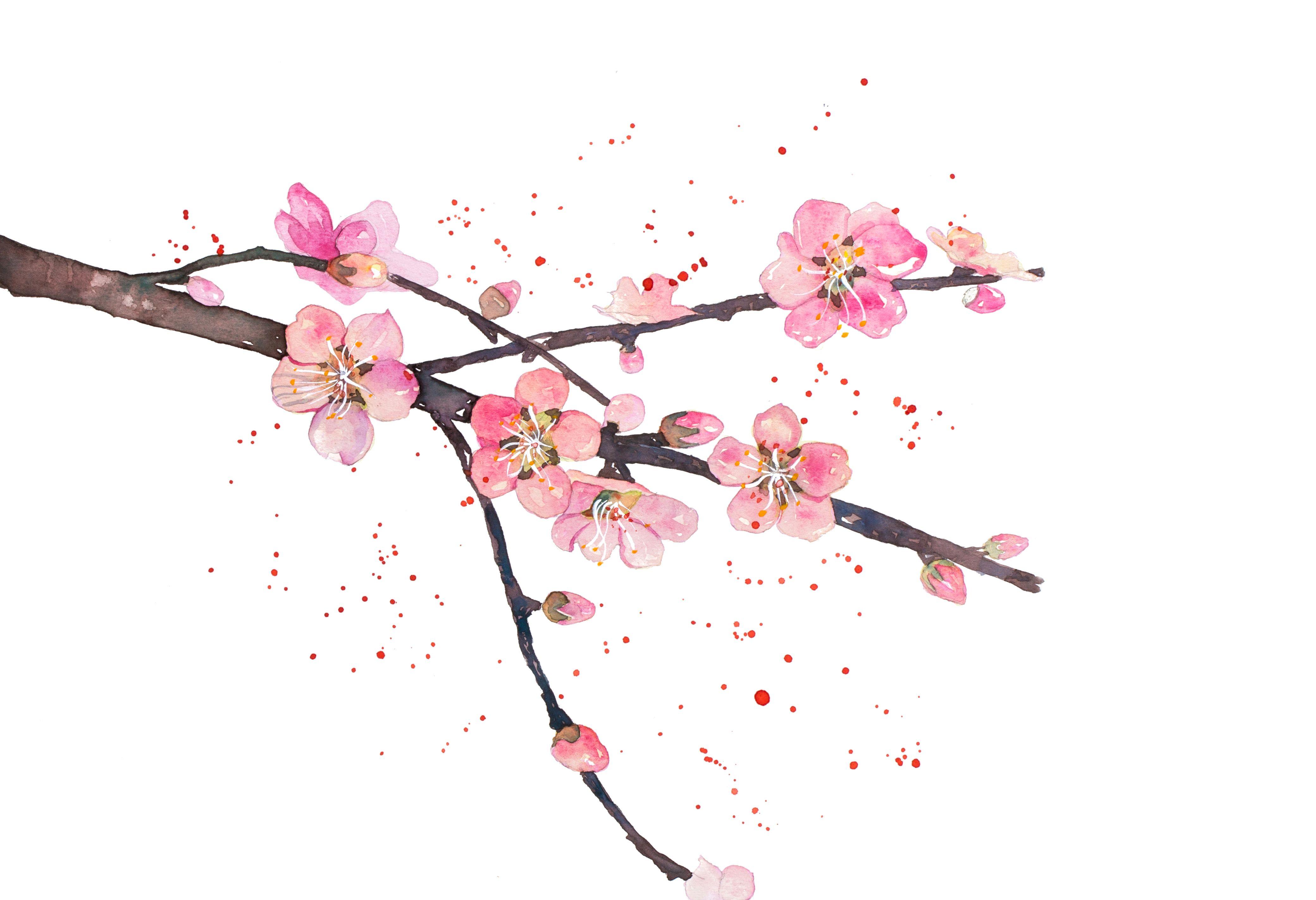 4161x2844 Peach Blossom Pawse Drawingdesign Design