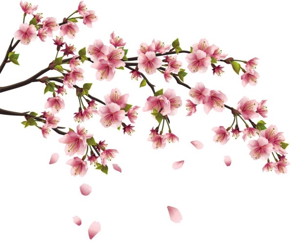 597x498 Peach Blossom Vector Free Vector Download (699 Free Vector)