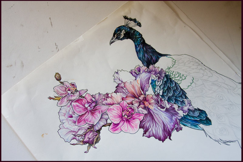 Traditional Flower Line Drawing : Peacock and flower drawing tattoo at getdrawings.com free for