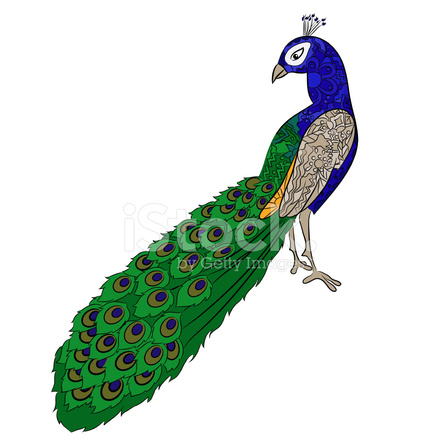 how to draw a realistic peacock step by step