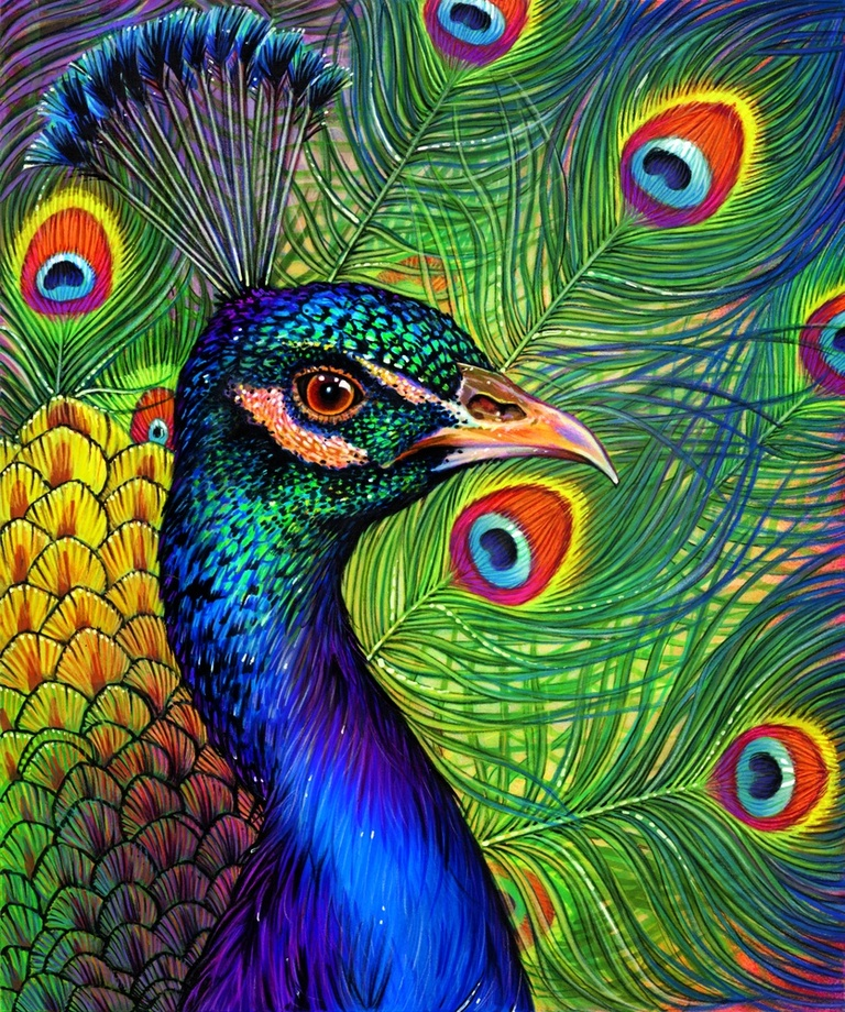 768x920 peacock drawing an art print by morgan davidson