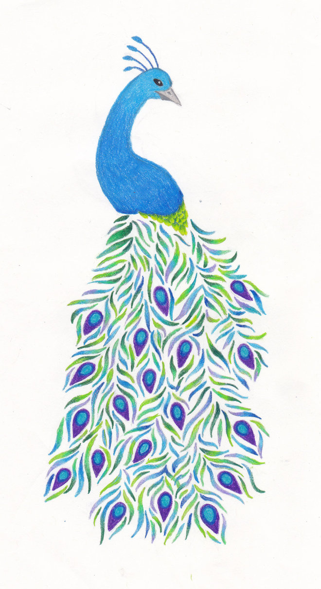 660x1210 Peacock Drawing by FloraLaurel on DeviantArt