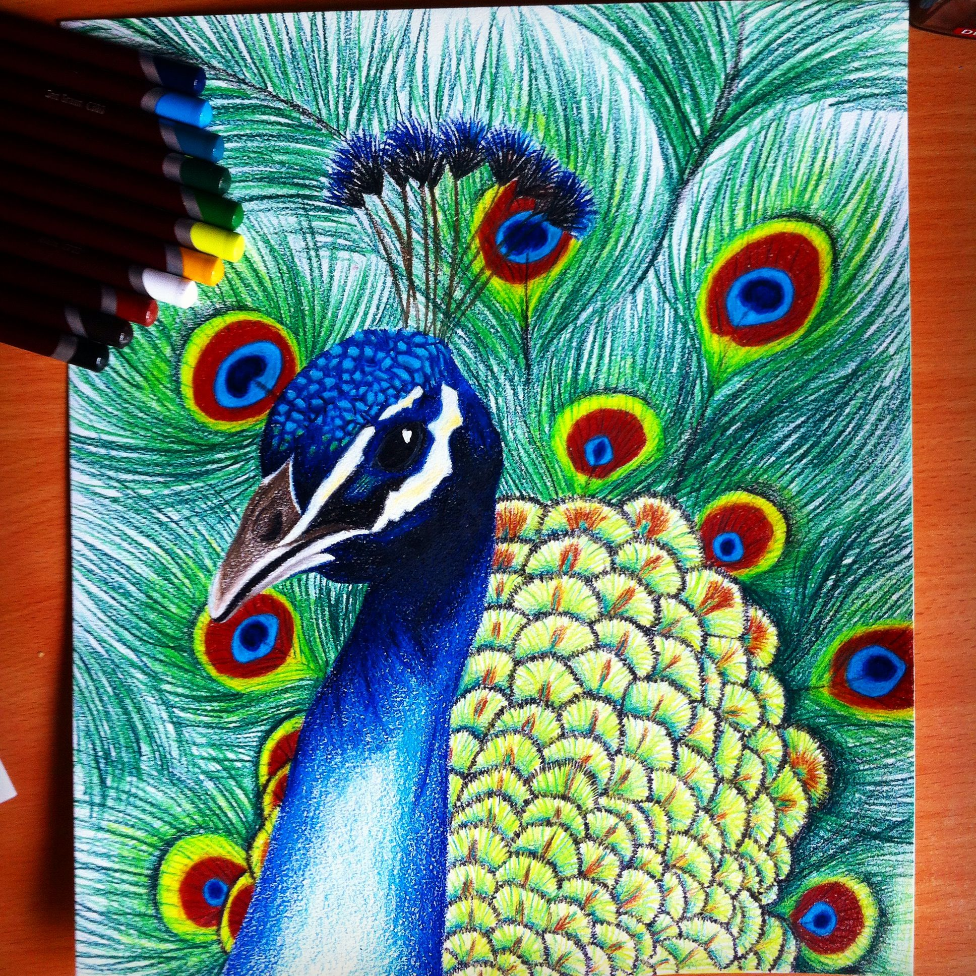 1936x1936 peacock drawing Coloring Pinterest Peacock drawing, Colored
