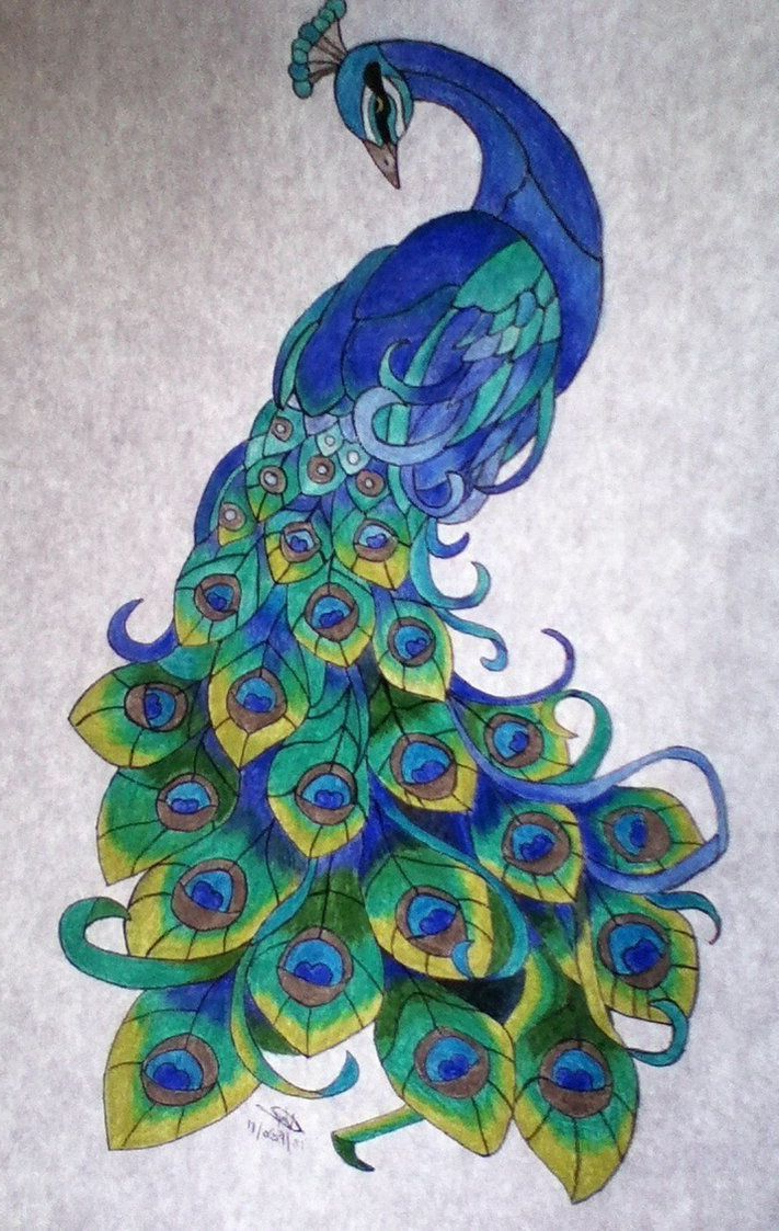 peacock drawing color at getdrawingscom free for