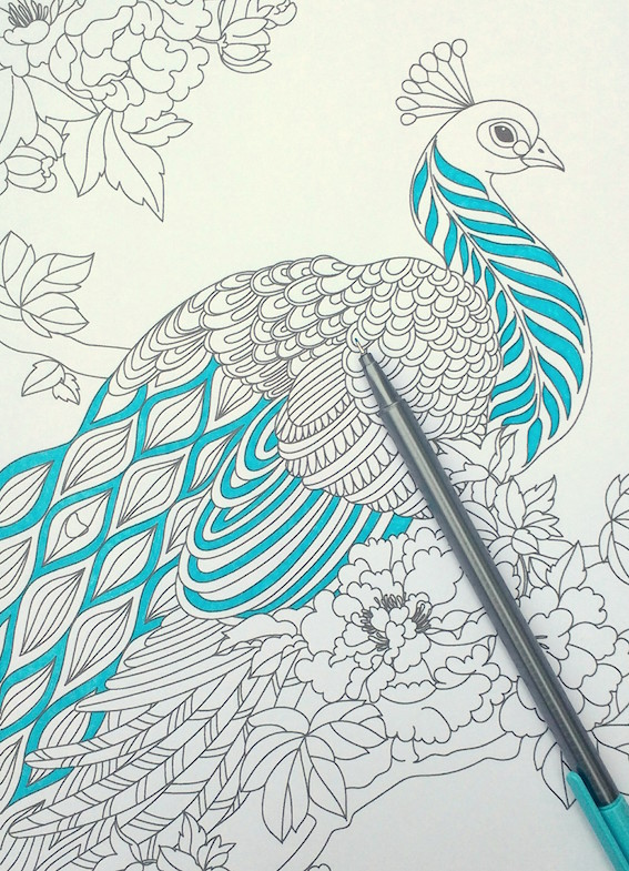 567x785 Step By Step Coloring Peacock Feathers