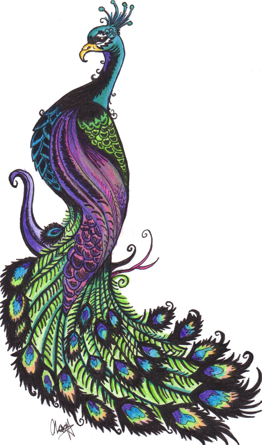 842x1429 World Best Colourful Drawing Stills Unique Peacock Drawing