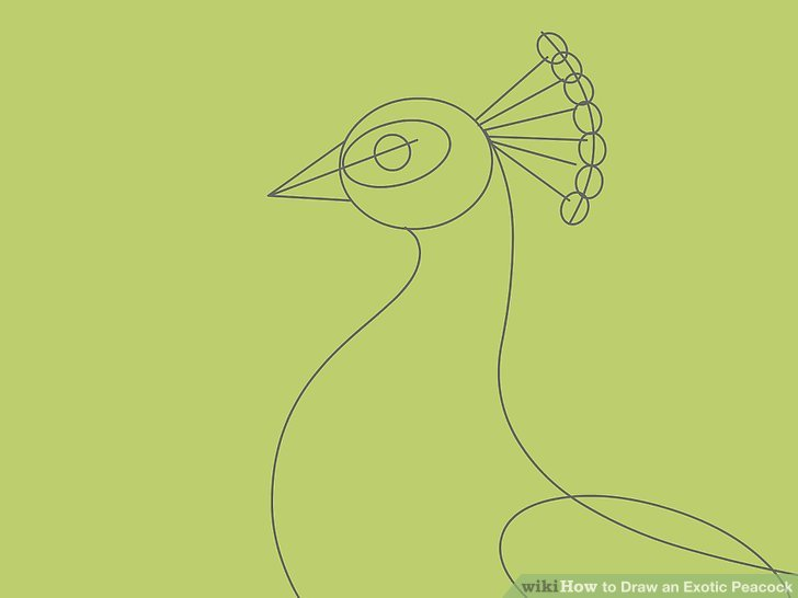 Simple Line Drawings Of Animals : Peacock drawing images at getdrawings free for personal use