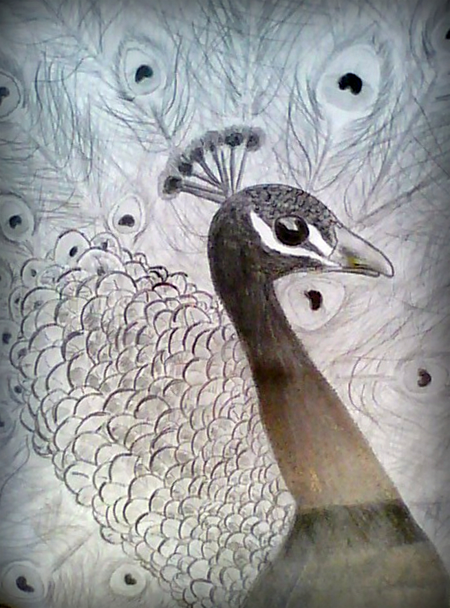 654x883 pencil peacock by samspot8r8s on deviantart