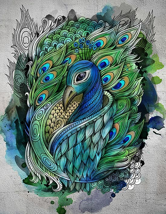 550x706 171 Best Peacock Images On Peacocks, Peacock And Birds