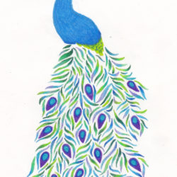 250x250 Peacock Drawing, Pencil, Sketch, Colorful, Realistic Art Images