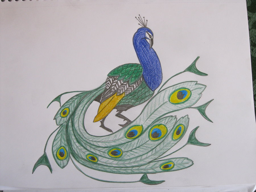 900x675 Peacock Sketch By Sapphireminx